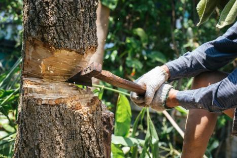 Abattage arbre Brabant Wallon